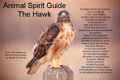 Eagle animal spirit guide meaning